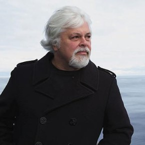 Paul Watson, fondatore e presidente di Sea Shepherd Conservation Society